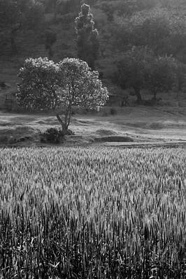 Photograph - Skn 6458 Overlooking The Field B/w by Sunil Kapadia