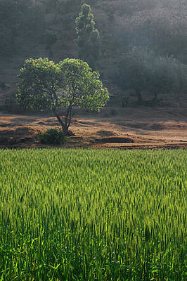 Photograph - Skn 6458 Overlooking The Field Color. by Sunil Kapadia