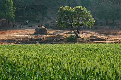 Photograph - Skn 6459 Village Scenario Color. by Sunil Kapadia