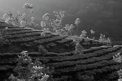 Photograph - Skn 6705 Trees Playground. B/w by Sunil Kapadia