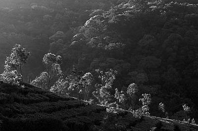 Photograph - Skn 6707 Tree Parade. B/w by Sunil Kapadia