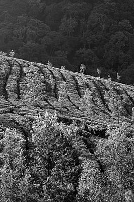 Photograph - Skn 6724 Romance Of Tea Gardens. B/w by Sunil Kapadia