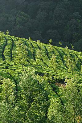 Photograph - Skn 6724 Romance Of Tea Gardens. Color by Sunil Kapadia