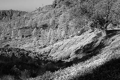 Photograph - Skn 67241 Majestic Munnar. B/w by Sunil Kapadia