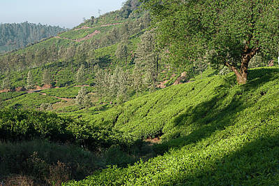Photograph - Skn 67241 Majestic Munnar. Color by Sunil Kapadia