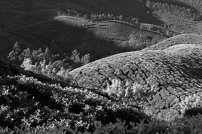 Photograph - Skn 6745 Tea Mounds Of Munnar. B/w by Sunil Kapadia