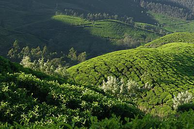 Photograph - Skn 6745 Tea Mounds Of Munnar. Color by Sunil Kapadia