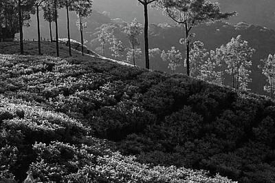 Photograph - Skn 6750 I Am Your Cup Of Tea. B/w by Sunil Kapadia