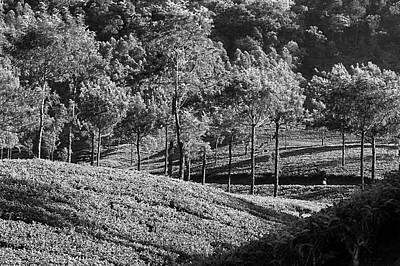 Photograph - Skn 6753 Marvel Of Munnar. B/w by Sunil Kapadia