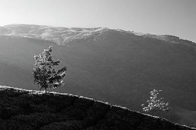 Photograph - Skn 6759  Romance Of The Trees. B/w by Sunil Kapadia