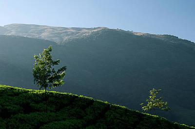 Photograph - Skn 6759  Romance Of The Trees. Color by Sunil Kapadia