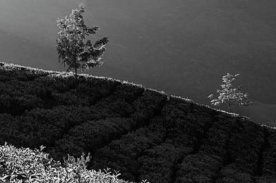 Photograph - Skn 6760  Trees On Song. B/w by Sunil Kapadia