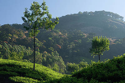 Photograph - Skn 6765 Grandeur Of Munnar by Sunil Kapadia