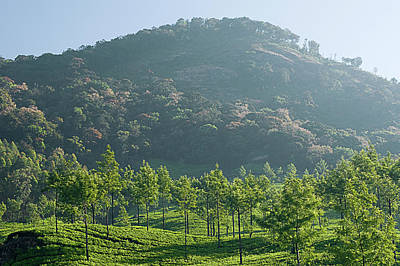 Landscapes Royalty-Free and Rights-Managed Images - SKN 6775 Majestic Munnar. Color by Sunil Kapadia