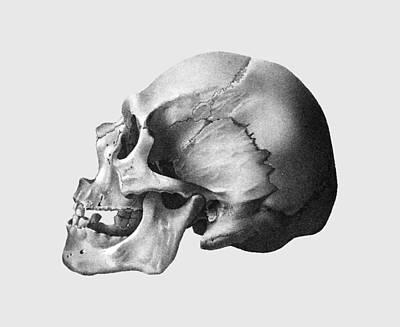 Skull #2 Original