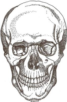 Pointalism Drawing - Skull by Americo Salazar
