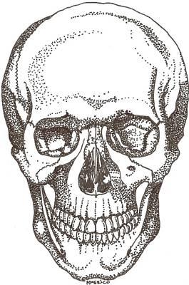 Skull Art Print by Americo Salazar