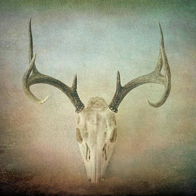 Photograph - Skull And Antlers Textured Photograph by Ann Powell
