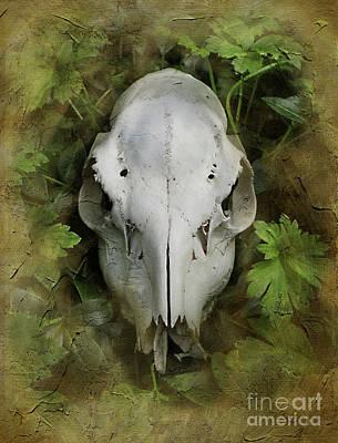 Skull And Leaves Art Print