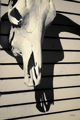 Photograph - Skull And Shadow Toned by David Gordon