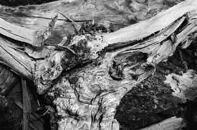 Photograph - Skull by Donna Blackhall