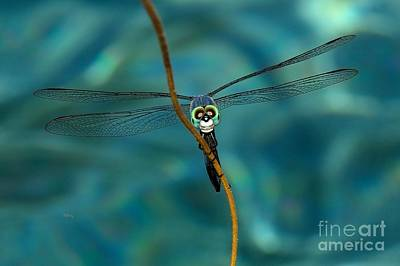 Photograph - Skull Face The Dragonfly by Patrick Witz