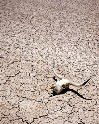 Dry Lake Photograph - Skull In Desert by Kelley King