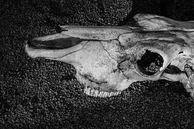 Photograph - Skull Iv Bw by David Gordon