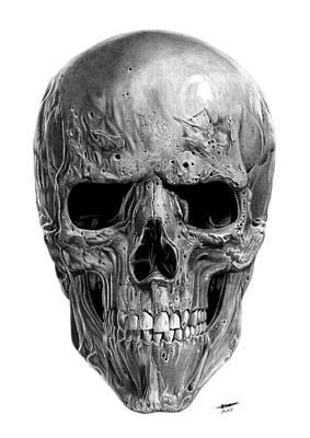 Human Skull Drawing - Skull by Kayleigh Semeniuk