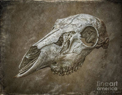 Skull On Brown Texture Print by Randy Steele