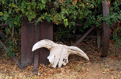 Photograph - Skull by Pamela Walton