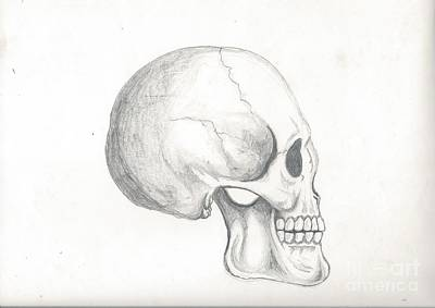 Drawing - Skull Study by Reed Novotny