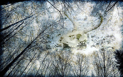 Photograph - Skully Dreams Of Beach And Trees by Ronda Broatch