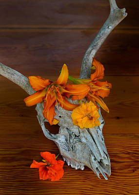 Photograph - Skully In Summer by Ronda Broatch