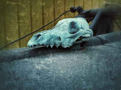 Photograph - Animal Skull by Tony Baca