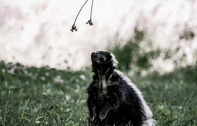 Photograph - Skunk by Tracy Winter
