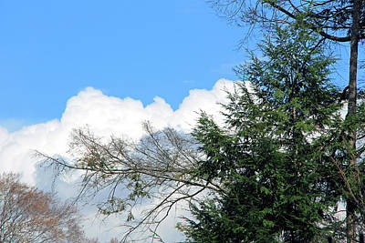 Photograph - Sky And Clouds With Trees by Cora Wandel