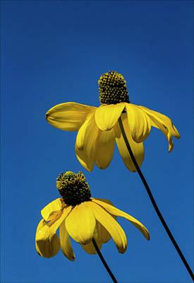 Photograph - Sky And Flowers by Robert Ullmann
