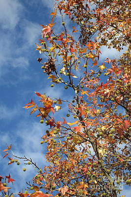Photograph - Sky And Leaves by Marie Neder