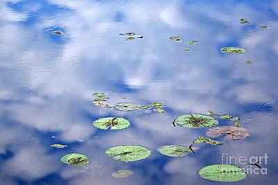 Photograph - Sky And The Lily Pads by Lila Fisher-Wenzel