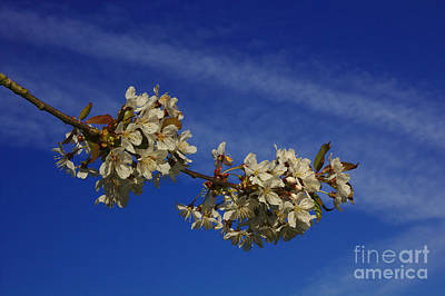 Photograph - Sky Flowers by Jeremy Hayden