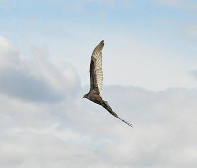 Flying Hawk Digital Art - Sky High by Bill Cannon