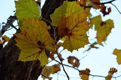 Photograph - Sky Of Autumn by Maria Urso