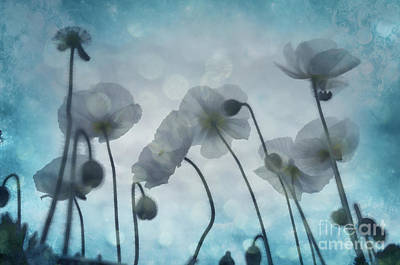 Photograph - Sky Poppies by Jim And Emily Bush