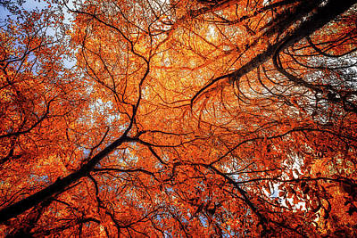 Sky Roots In Forest Red Art Print
