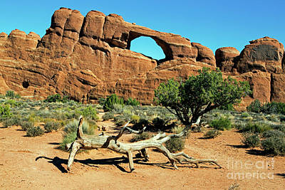 Photograph - Skyline Arch by Fred Stearns