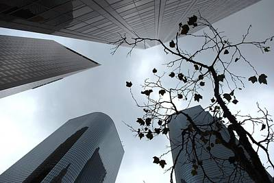 Photograph - Skyscrapers And Tree View by Matt Harang