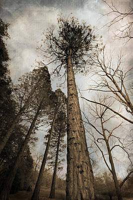 Photograph - Sky'sthe Limit by Robin-Lee Vieira