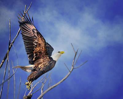 Photograph - Skyward - Bald Eagle by Nikolyn McDonald