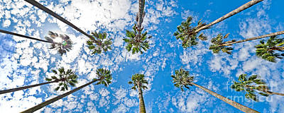 Daylight Photograph - Skyward Palms by Az Jackson